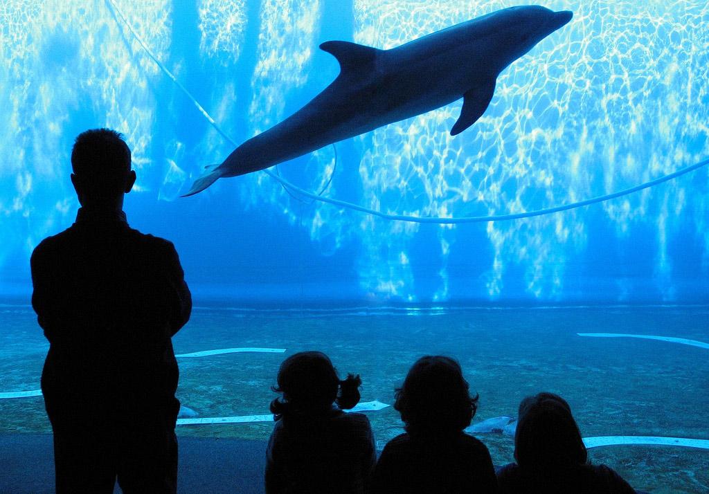 L 39 acquario di genova una visita ideale per grandi e piccini for Acquario per tartarughe grandi