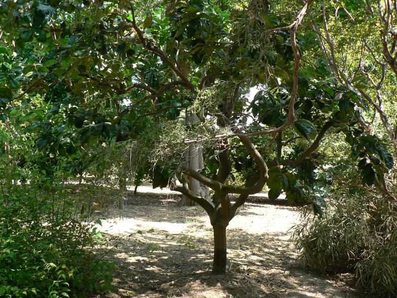 Piante dei Giardini Hanbury