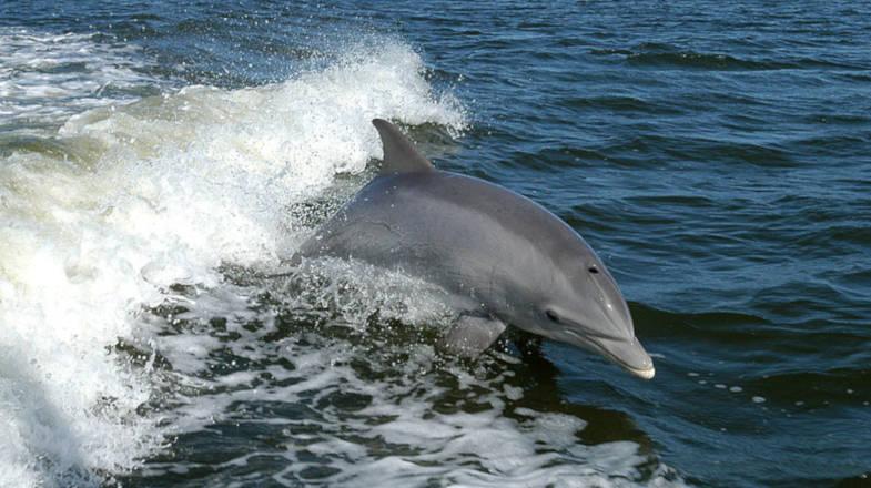Avvistamento delfino, tour di whale watching