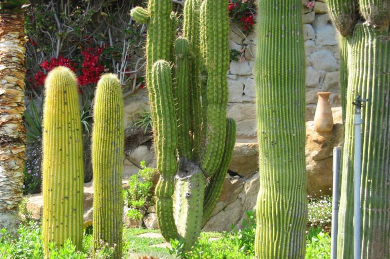 Giardino Esotico Pallanca a Bordighera