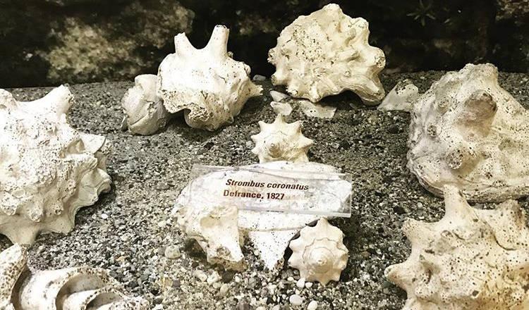 I fossili scoperti nella Riserva Naturale Regionale di Rio Torsero, oggi nel museo