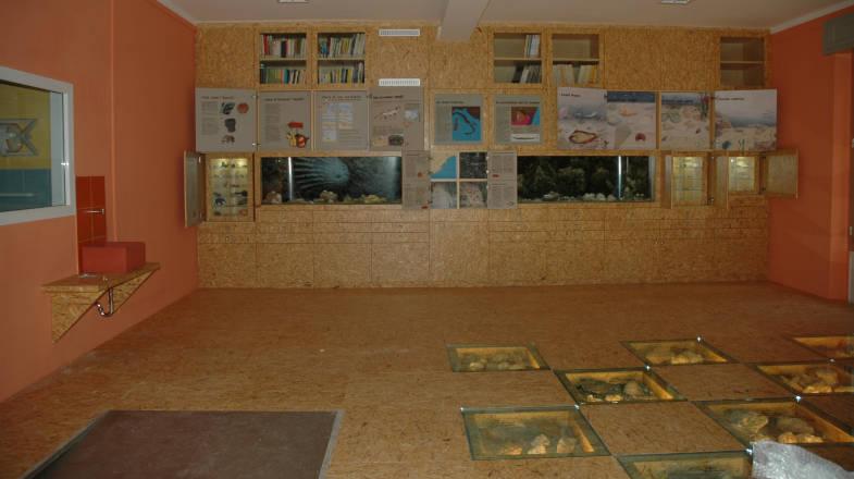 Sala espositiva all'interno del Museo Paleontologico Silvio Lai