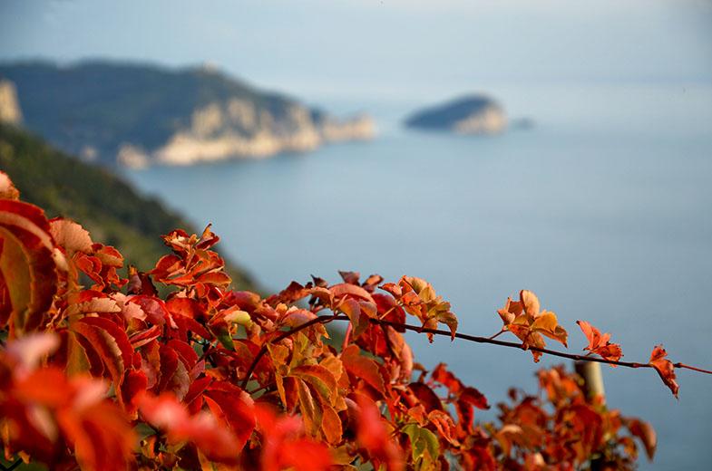 panorama con foglie rosse